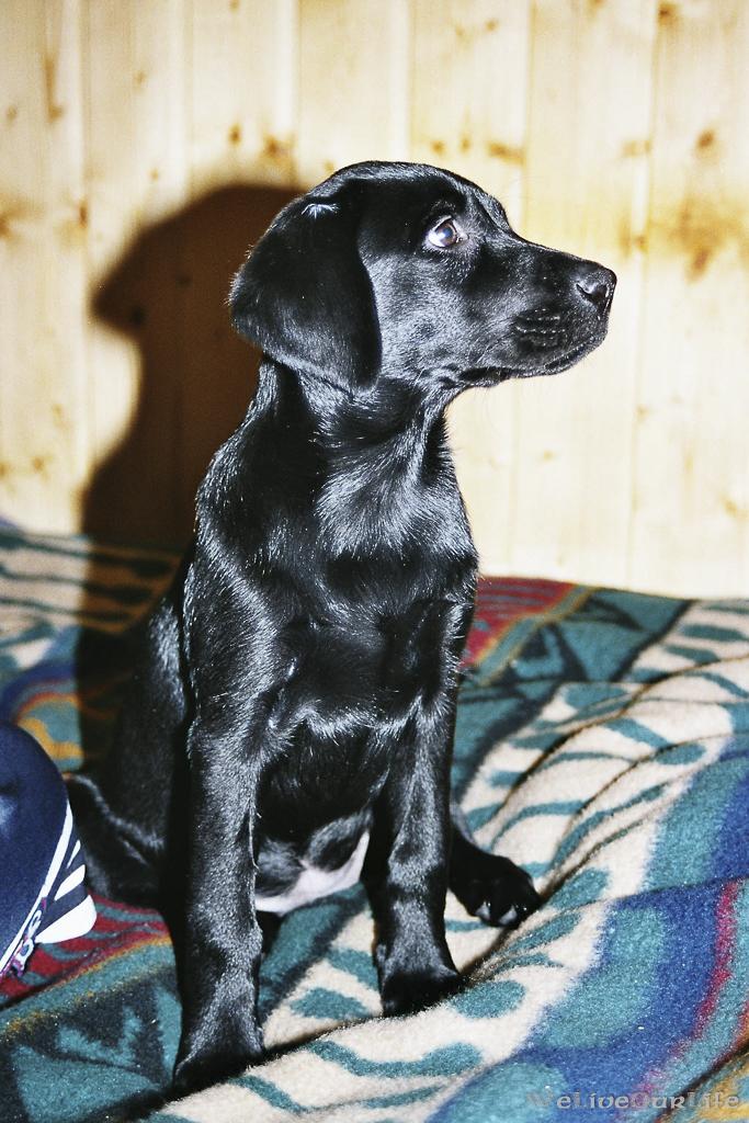Brady-Welpe-Junghund_16