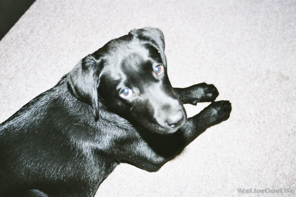Brady-Welpe-Junghund_18
