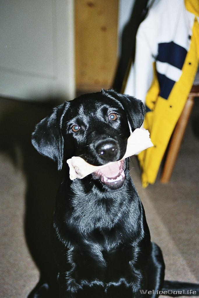 Brady-Welpe-Junghund_31