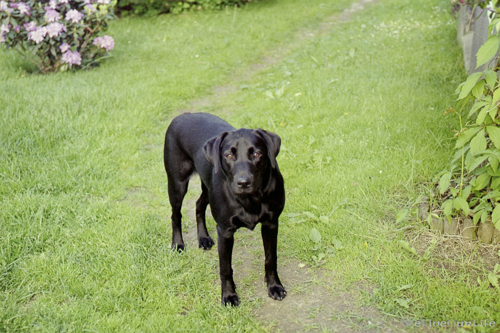 Brady-Welpe-Junghund_32