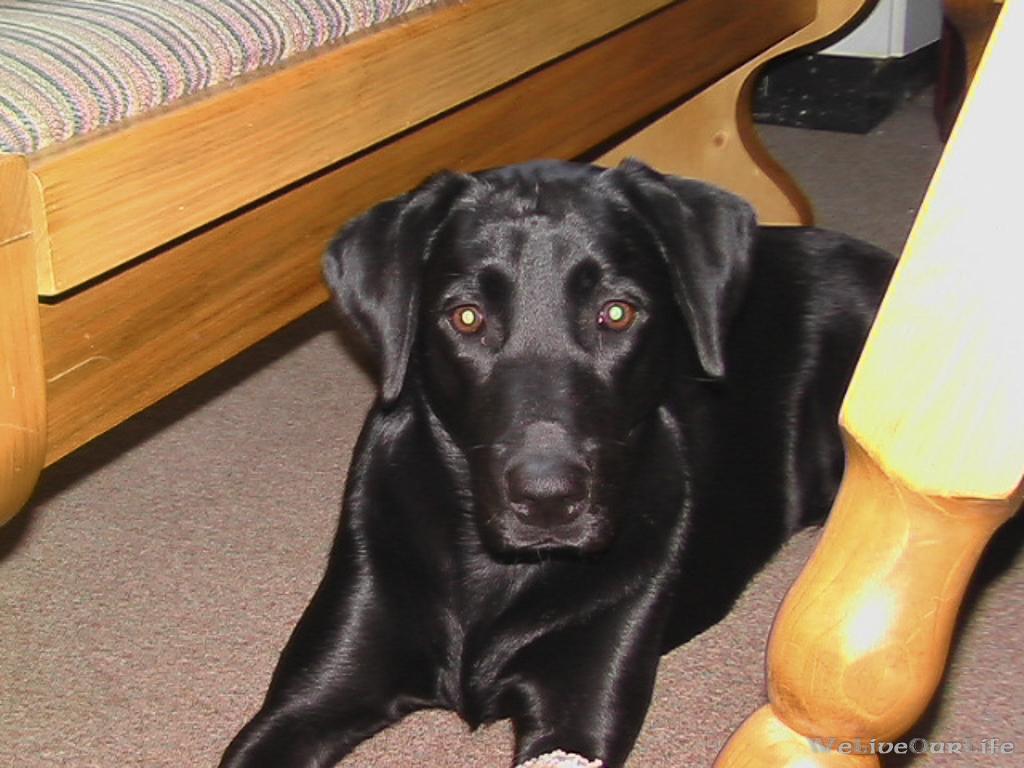 Brady-Welpe-Junghund_34