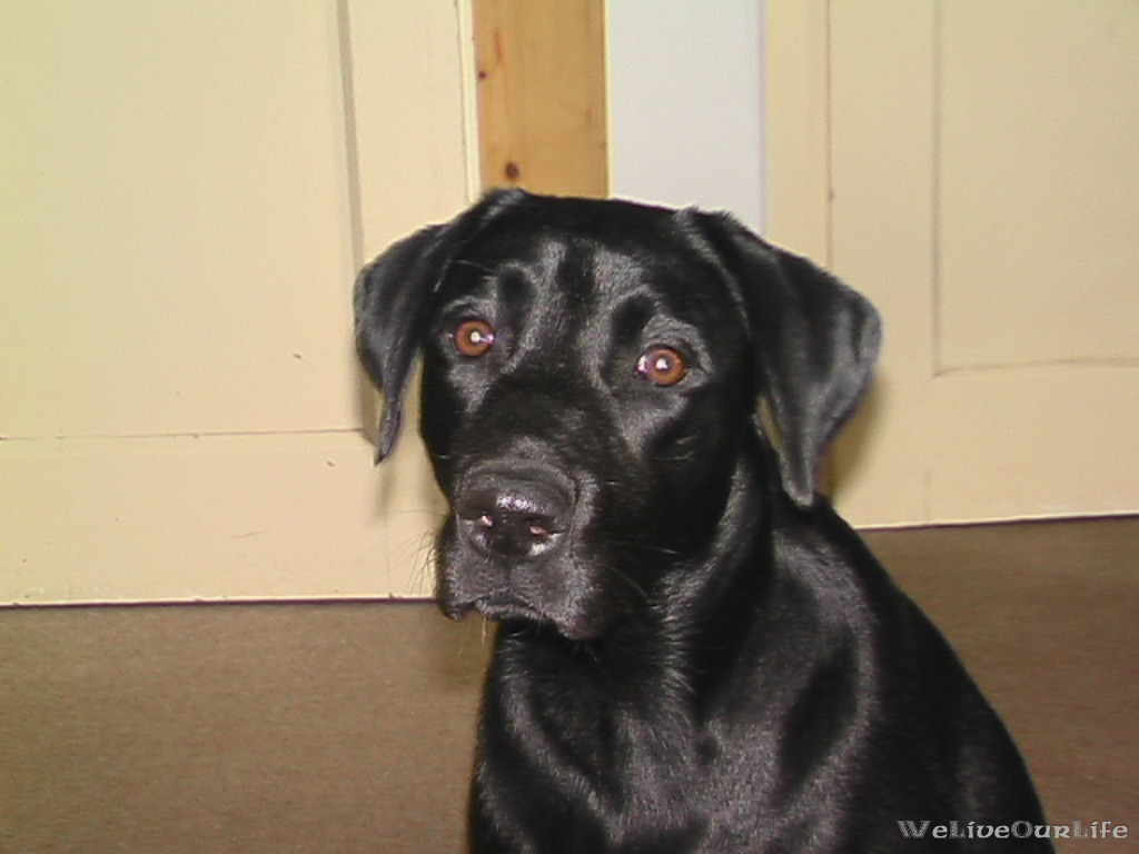 Brady-Welpe-Junghund_36