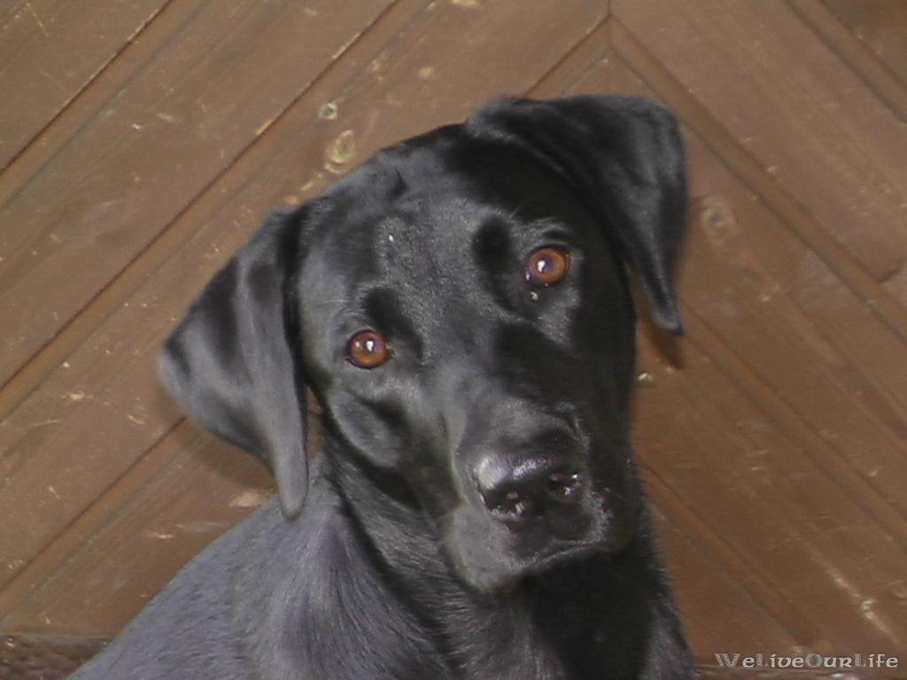 Brady-Welpe-Junghund_42