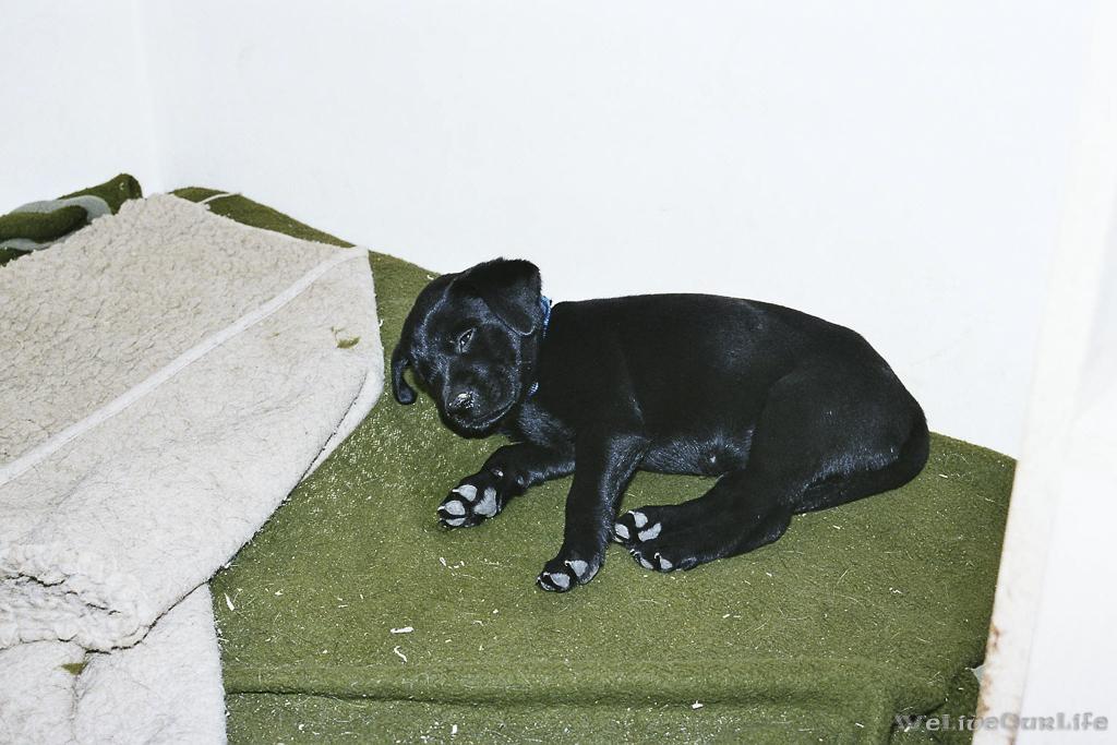 Brady-Welpe-Junghund_49