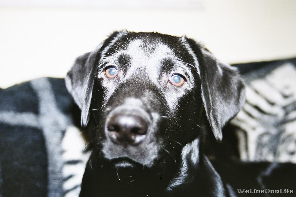 Brady-Welpe-Junghund_54