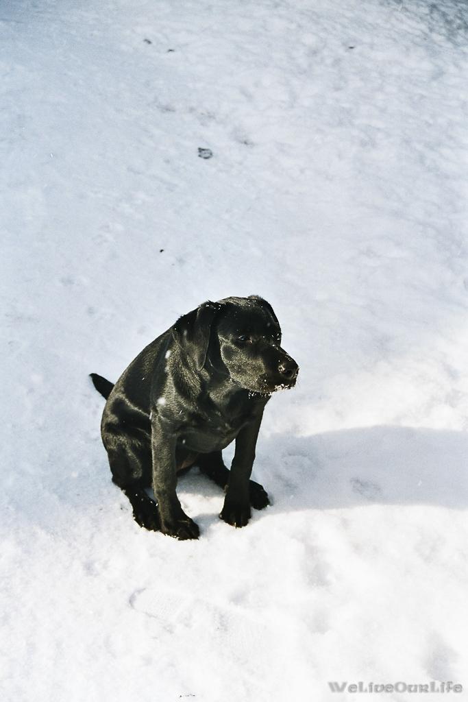 Brady-Welpe-Junghund_57