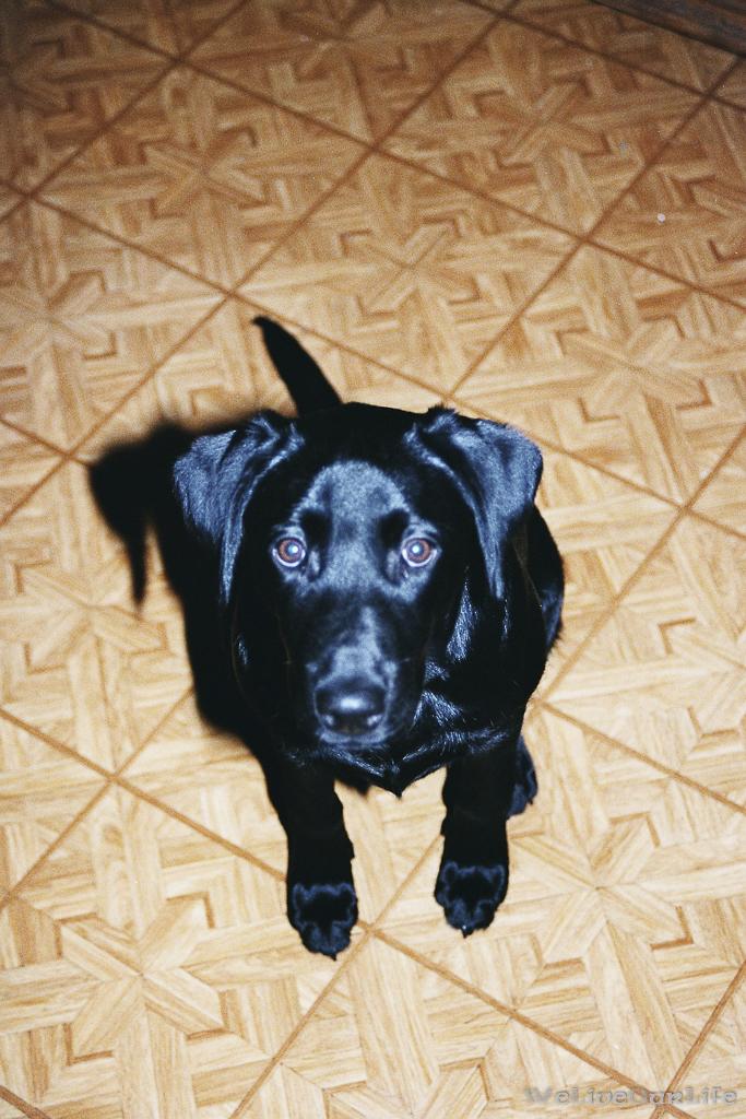Brady-Welpe-Junghund_58