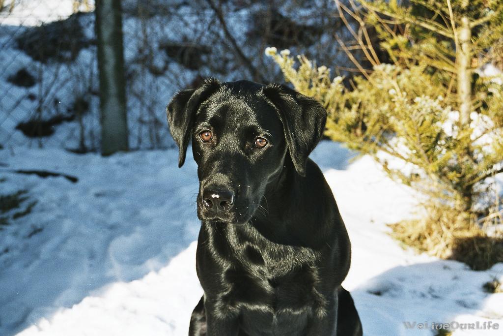 Brady-Welpe-Junghund_60