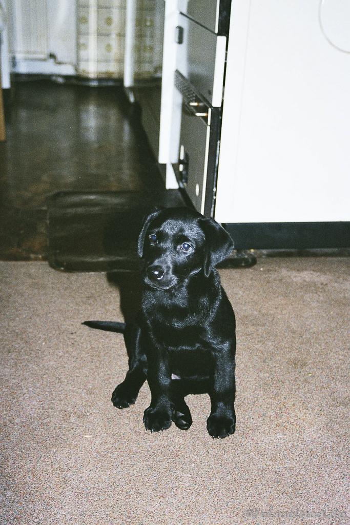Brady-Welpe-Junghund_8