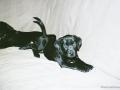 Brady-Welpe-Junghund_1