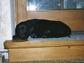 Brady-Welpe-Junghund_10