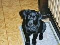 Brady-Welpe-Junghund_11