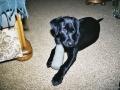 Brady-Welpe-Junghund_14