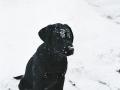 Brady-Welpe-Junghund_19