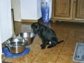 Brady-Welpe-Junghund_2