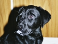 Brady-Welpe-Junghund_20
