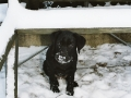 Brady-Welpe-Junghund_22