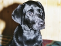 Brady-Welpe-Junghund_24