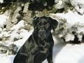 Brady-Welpe-Junghund_25
