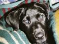 Brady-Welpe-Junghund_26