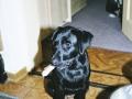 Brady-Welpe-Junghund_27