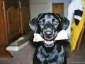 Brady-Welpe-Junghund_29