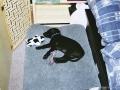 Brady-Welpe-Junghund_3