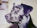 Brady-Welpe-Junghund_33