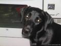 Brady-Welpe-Junghund_38