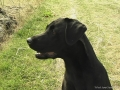Brady-Welpe-Junghund_40