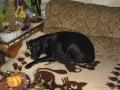 Brady-Welpe-Junghund_43