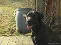 Brady-Welpe-Junghund_45