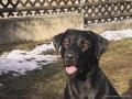 Brady-Welpe-Junghund_46