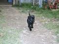 Brady-Welpe-Junghund_47
