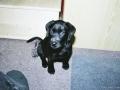 Brady-Welpe-Junghund_52