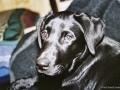 Brady-Welpe-Junghund_55