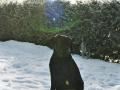 Brady-Welpe-Junghund_56