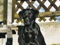 Brady-Welpe-Junghund_59