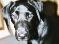 Brady-Welpe-Junghund_61
