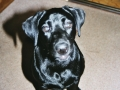 Brady-Welpe-Junghund_63