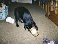 Brady-Welpe-Junghund_9