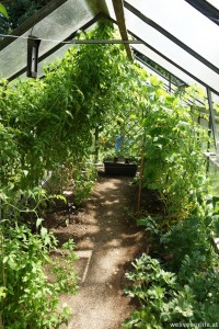 Urwald! Links die Tomaten, rechts die Gurken und vor der anderen Tür die Melonen
