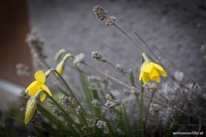 Frühlingsboten 2016 d